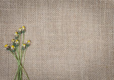 Предпосылка текстуры мешковины Стоковое Фото