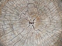 Предпосылка текстуры пня дерева Деревянная предпосылка Стоковое Изображение