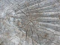 Предпосылка текстуры пня дерева Деревянная предпосылка Стоковые Изображения