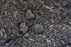 Предпосылка текстуры почвы торфа Стоковое Изображение