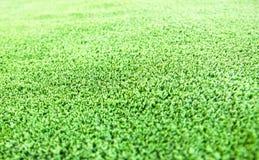 предпосылка текстуры пола дерновины зеленой травы Стоковая Фотография