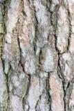 Предпосылка текстуры расшивы сосны Стоковые Фото