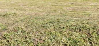 Предпосылка текстуры сена Стоковая Фотография RF