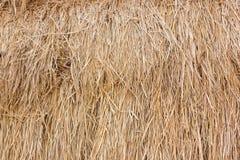 Предпосылка текстуры соломы риса Стоковое фото RF
