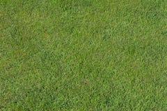 Предпосылка текстуры травы Стоковое Изображение