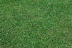Предпосылка текстуры травы Стоковая Фотография RF