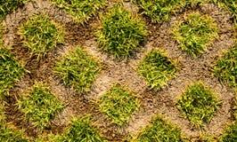 Предпосылка текстуры цемента травы смешанная Стоковые Изображения RF