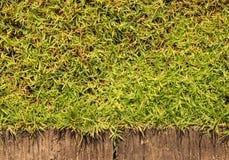 Предпосылка текстуры цемента травы смешанная Стоковая Фотография RF
