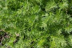 Предпосылка текстуры яркой ой-зелен травы Стоковые Фотографии RF