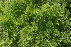 Предпосылка текстуры яркой ой-зелен травы Стоковая Фотография RF