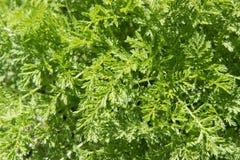Предпосылка текстуры яркой ой-зелен травы Стоковые Изображения