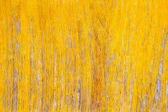 Предпосылка текстуры Grunge желтая деревянная Стоковое Изображение