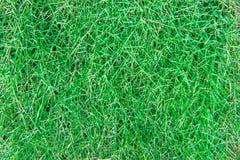 Предпосылка текстуры Sward зеленая Стоковые Изображения