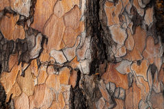 Предпосылка темноты расшивы лиственницы Стоковое Изображение RF