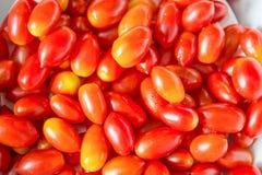 Предпосылка томатов вишни Стоковое Изображение