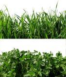 Предпосылка: трава клевера и пшеницы Стоковые Фотографии RF