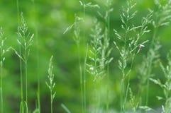 Предпосылка травы весны Стоковое фото RF