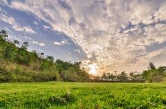 Предпосылка травы голубая неба зеленая, свежих и естественных Стоковые Фотографии RF