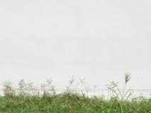 предпосылка травы и белого цемента Стоковые Изображения RF