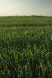 Предпосылка травы и неба Стоковые Фотографии RF