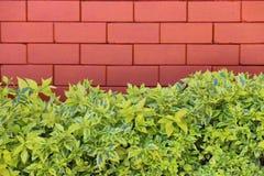 Предпосылка травы каменная Стоковые Фото