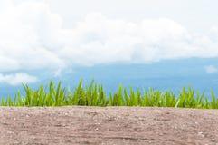 Предпосылка травы на холме Стоковая Фотография