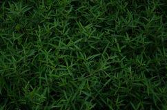 Предпосылка травы, трава Стоковое Изображение