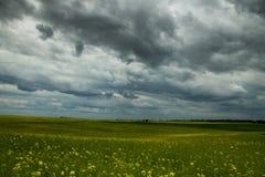 Предпосылка травы, цветков и неба Стоковое Изображение