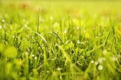 Предпосылка травы Стоковая Фотография RF