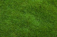 Предпосылка травы Стоковые Изображения RF