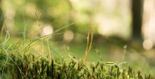 предпосылка травянистая Стоковые Изображения RF