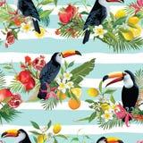 Предпосылка тропических плодоовощей, цветков и птиц Toucan безшовная Ретро картина лета Стоковое фото RF