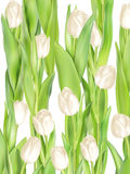 Предпосылка тюльпанов декоративная 10 eps Стоковые Изображения