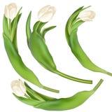 Предпосылка тюльпанов декоративная 10 eps Стоковая Фотография RF