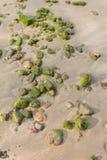 предпосылка утеса на зоне пляжа Стоковые Изображения RF