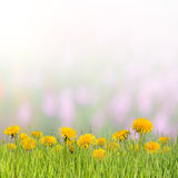 предпосылка 06 флористическая Стоковые Изображения RF