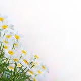 предпосылка 19 флористическая Стоковые Изображения