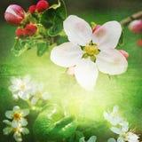 Предпосылка цветения весны Стоковое Изображение RF