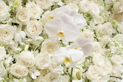 Предпосылка цветения весны Стоковая Фотография RF