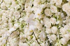 Предпосылка цветения весны Стоковое фото RF
