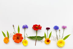 предпосылка цветет белизна Взгляд сверху, плоское положение Стоковые Фото