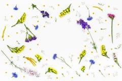 предпосылка цветет белизна Взгляд сверху, плоское положение Стоковая Фотография