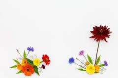 предпосылка цветет белизна Взгляд сверху, плоское положение Стоковые Изображения
