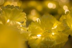 предпосылка цветет желтый цвет Стоковые Фотографии RF