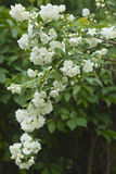 предпосылка цветет листья Стоковая Фотография