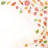 предпосылка цветет мак Стоковые Изображения RF