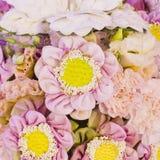 предпосылка цветет пинк лотоса Стоковое Изображение