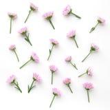 1 предпосылка цветет пинк Плоское положение Стоковое Изображение