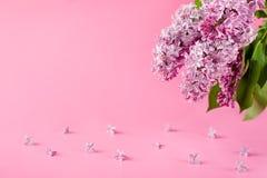предпосылка цветет пинк сирени Поздравительная открытка, карточка приглашения Стоковая Фотография RF