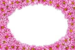 1 предпосылка цветет пинк Стоковое Фото